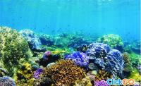 Bật Mí Kinh Nghiệm Lặn Ngắm San Hô Tại Phú Quốc