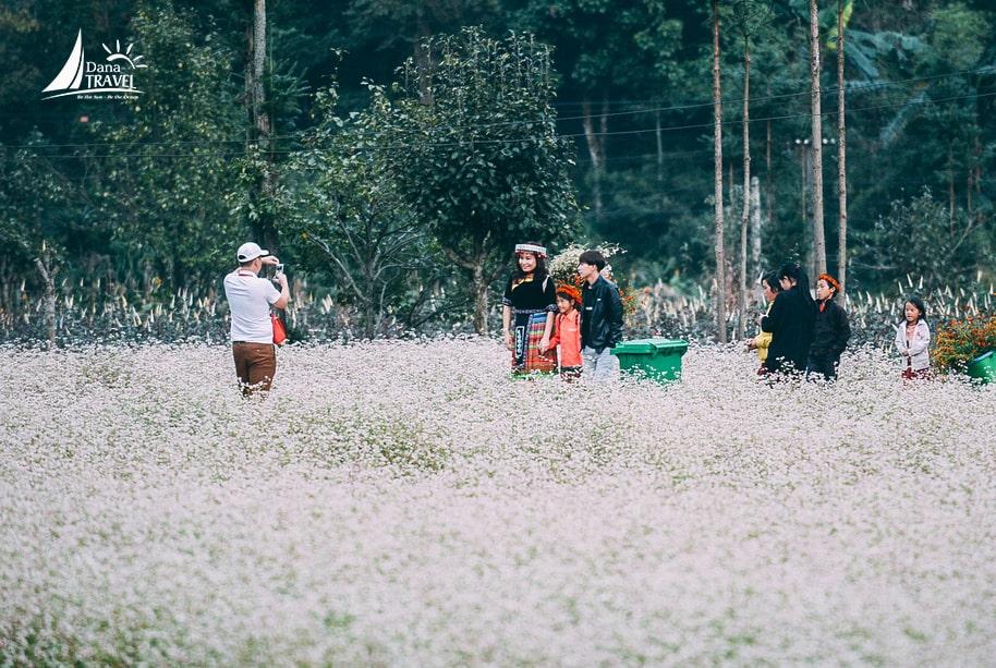 Ta có hẹn với Hà Giang, ngắm mùa hoa tam giác mạch tuyệt đẹp vào tháng 10