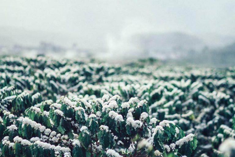 Tháng 2 đến Gia Lai ngắm mùa hoa cà phê nở trắng trời đẹp quên lối về